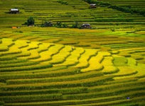 Golden season in Mu Cang Chai
